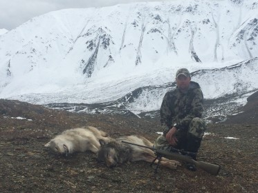Customer and Gunsmith Steve Hallenbech with his two Alaskan Wolves shot with his Lilja Barreled 27 O'Connor (Cartridge he designed.) What a great hunt! Nice shooting Steve!