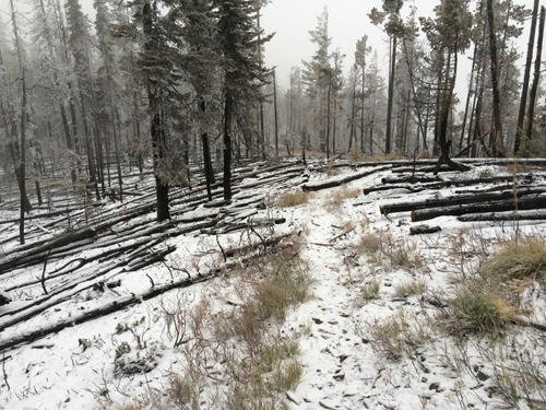Part of the upper section of the 14 Mile Trail during an October snow storm.