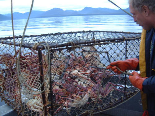 Checking the crab pots and getting a nice mess of dungeness crab.