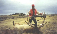 Dan's elk from 1994. He shot this bull about 8:00 in the morning on opening day with a .300 Winchester magnum at 400+ yards. The bull is a 7x7 that scores about 350 B&C.