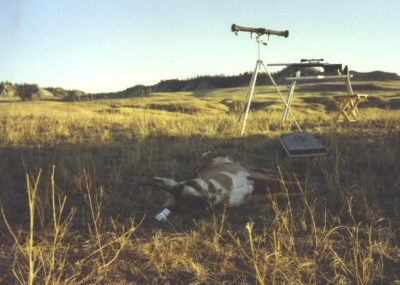 Antelope country of eastern Montana. The rifle is a 338/416 Rigby and the rangefinder is a dependable Barr & Stroud. This 'goat' was shot at over 800 yards. The bench is an Armor Metal Products unit.