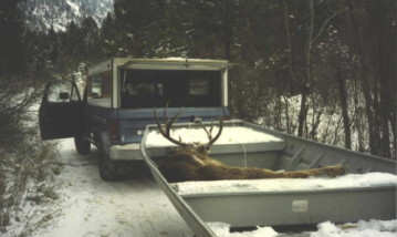 Here's a nice 4-point buck we got in the 1980's late in the season. There was no road access where this buck was shot and we brought him out whole in the boat after sliding him down to the river from higher up in the canyon. It was cold this day, near zero as I remember now. Too cold be be boating but a great day to hunt rutting bucks.