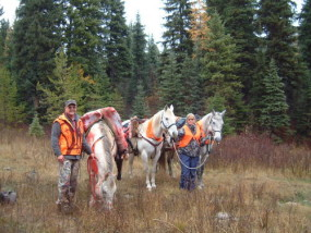 Packing out elk quarters in the fall of 2005. Horses take all of the fun out of packing. Actually horses like these fine geldings are worth their weight in gold at a time like this.